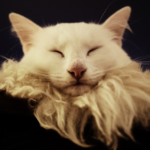 Profilbild von O_l_y_s_s_e_u_s