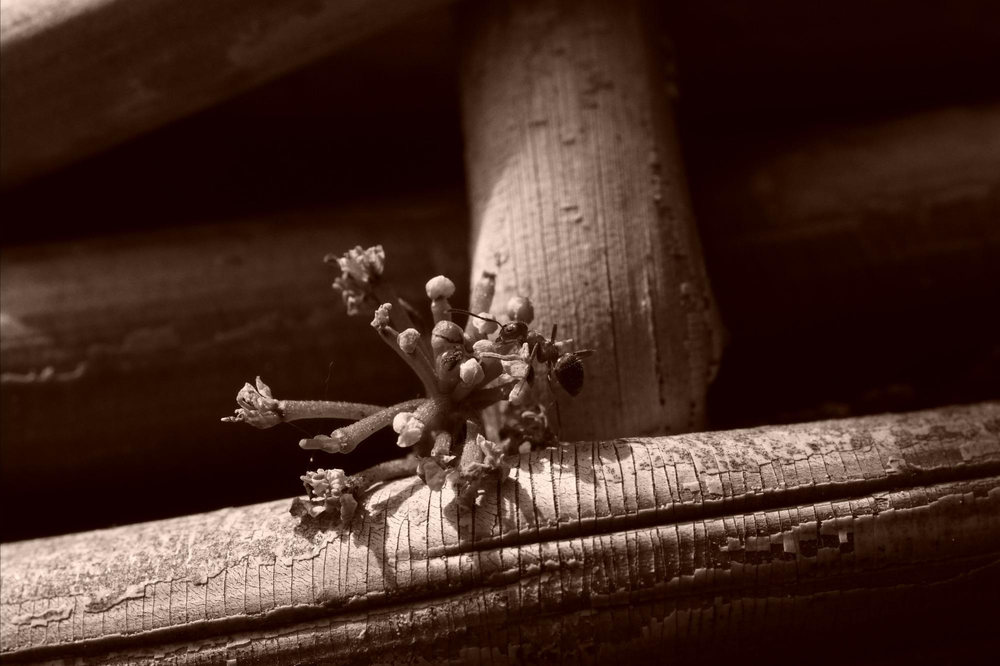 Ameise am Blumenkorb